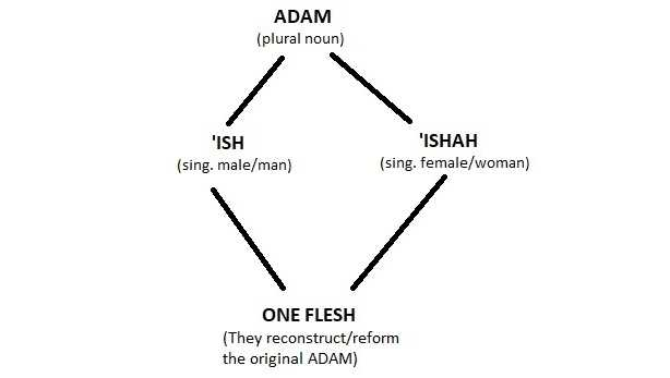 Adam-Diagram2